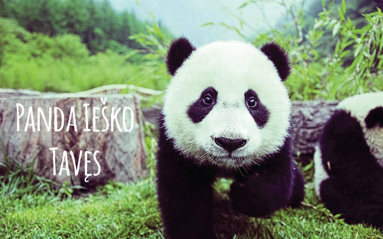 panda iesko