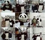 panda-against-the-haters